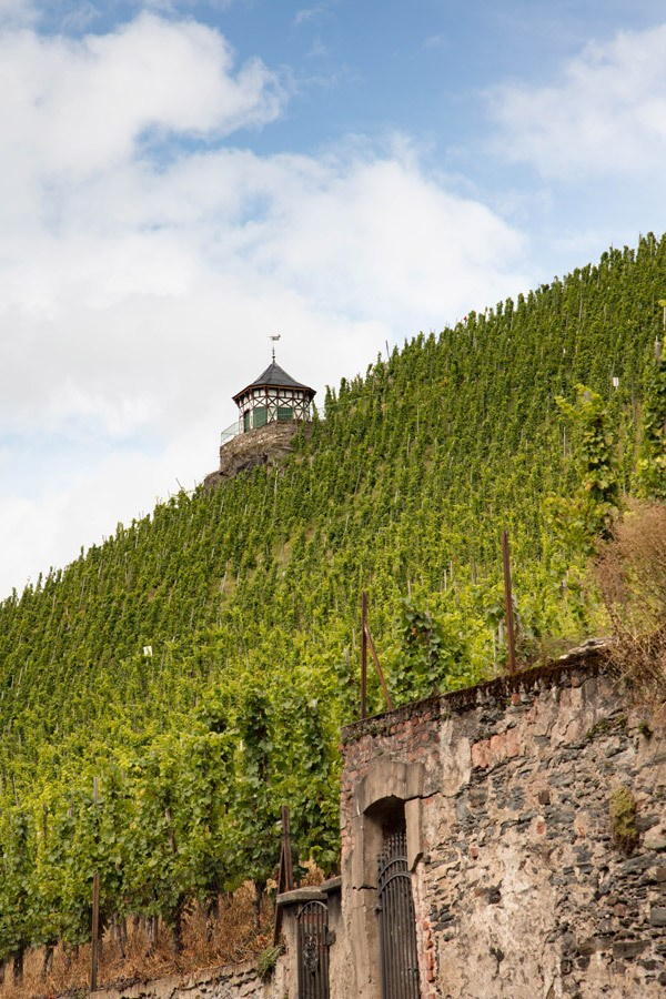 Mosel Wine - Grapes grow on the steep hillsides