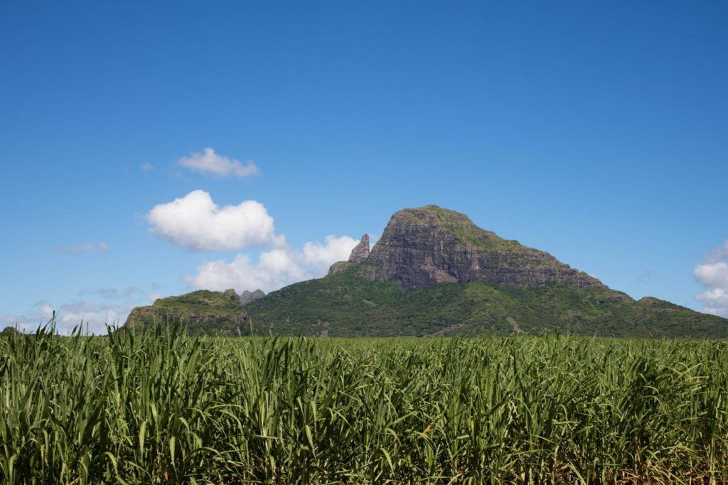 A mountain juts out of the sugar cane fields.