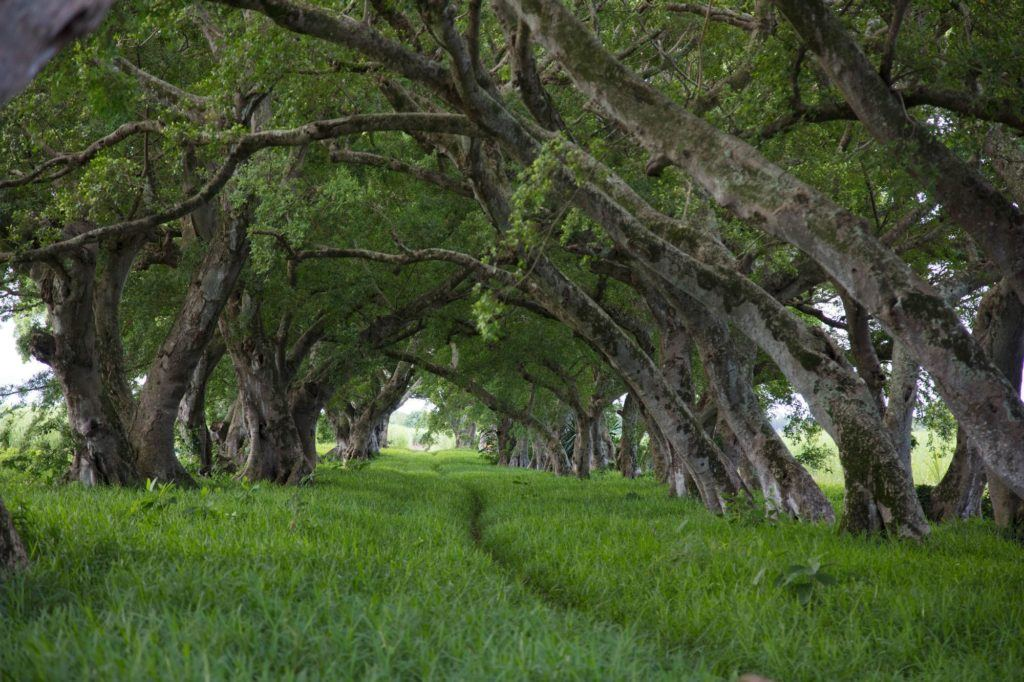 A tree tunnel not far from the airport.