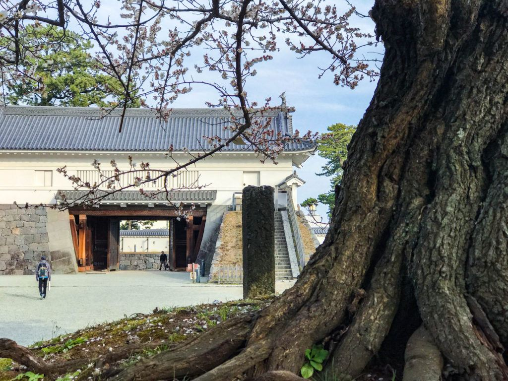 Entry gate into Odawara Castle with some fresh spring plum blossoms.