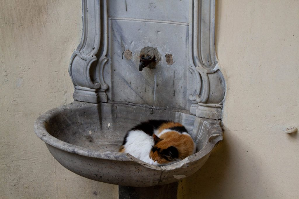 Cat in a fountain sleeping.