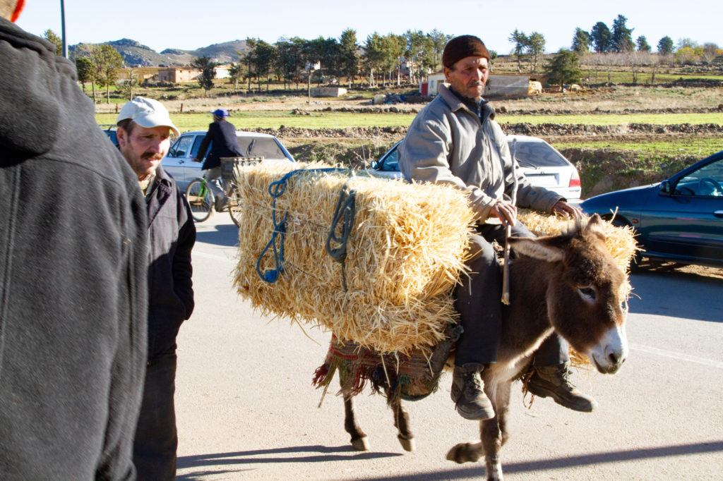 A donkey carries his master and two bales of hay to the Berber Market.