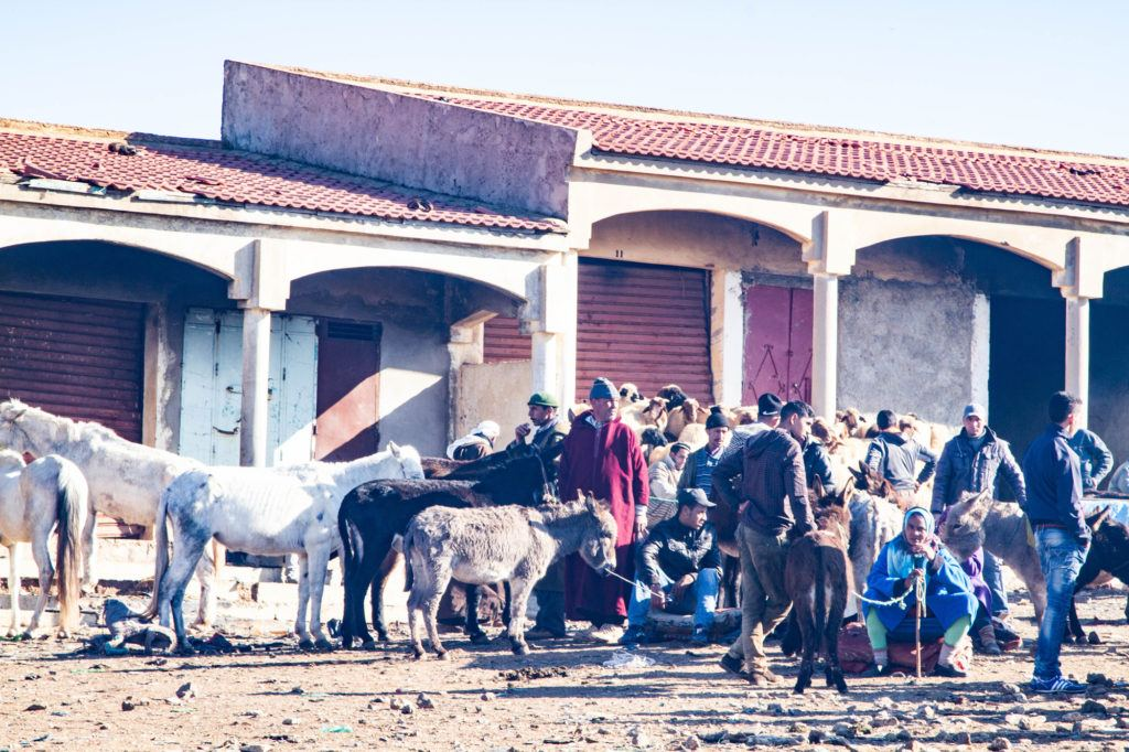 Men buying and selling donkeys and horses in the Berber market livestock area.