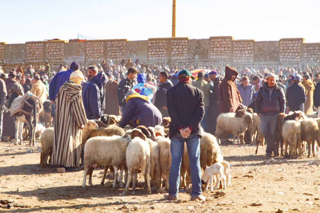 Livestock section of the Azrou Berber Market filled with sheep, lambs, and the people who buy and sell them.