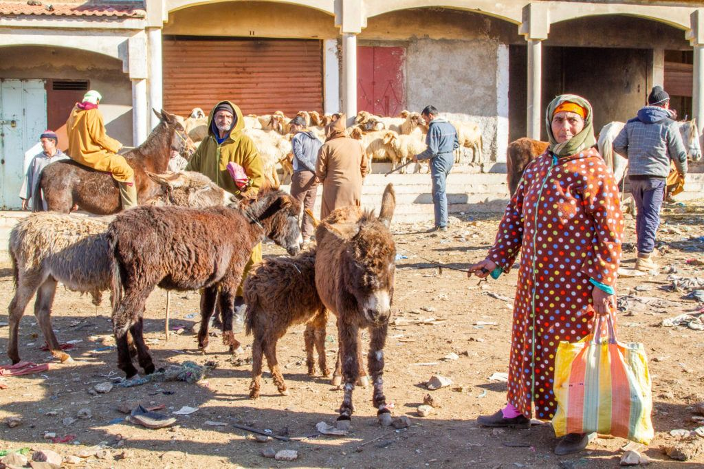 A couple with donkeys for sale at the Azrou Berber Market.