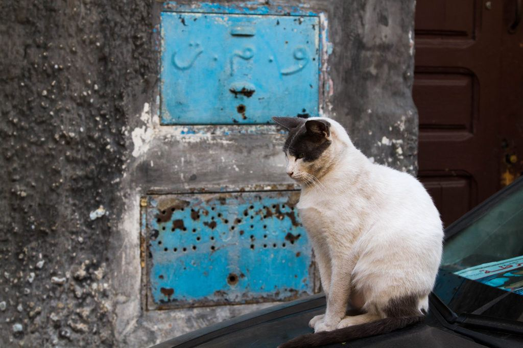 One of the many Chefchaouen cats found around the Old Town.
