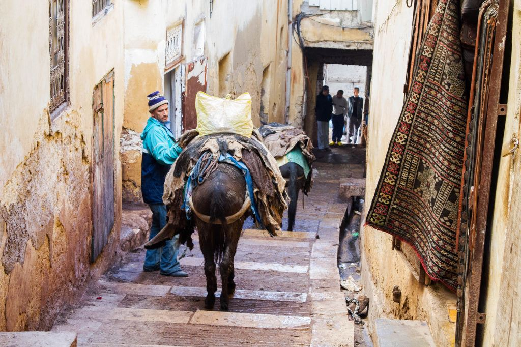 A winding street of the Fez Medina is blocked by a delivery man and his donkeys.