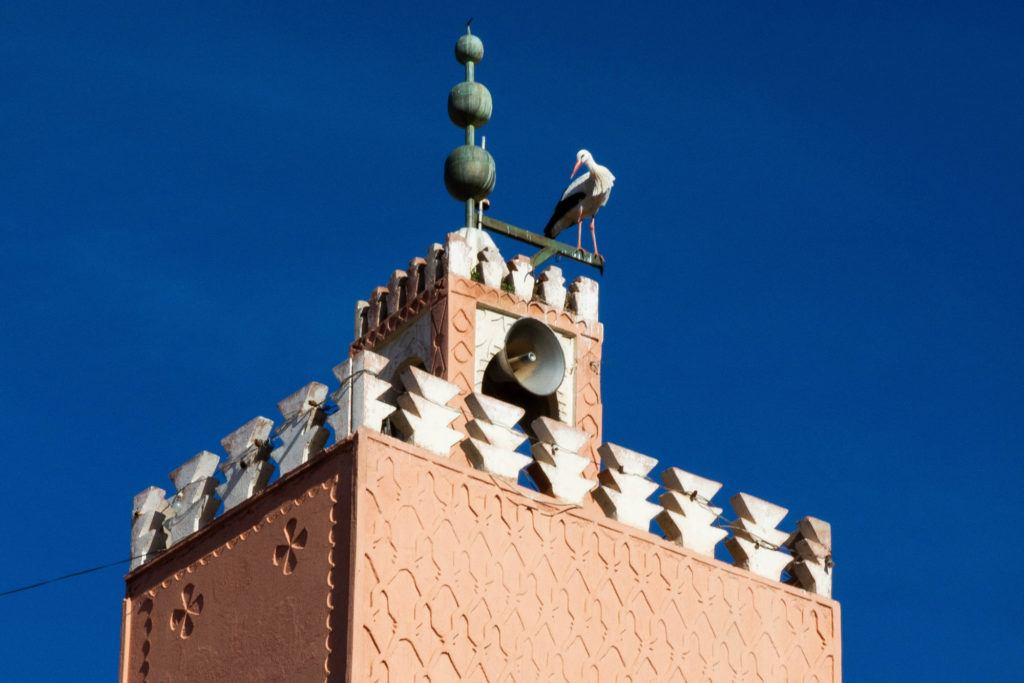 A stork standing on the top of the Minaret at the Koutoubia Mosque in Marrakech.