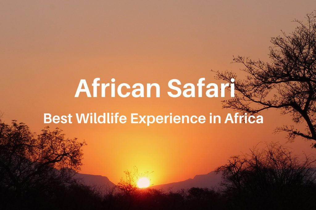 Another great South African safari game drive ends with a sunset in Thornybush Game Reserve in South Africa.