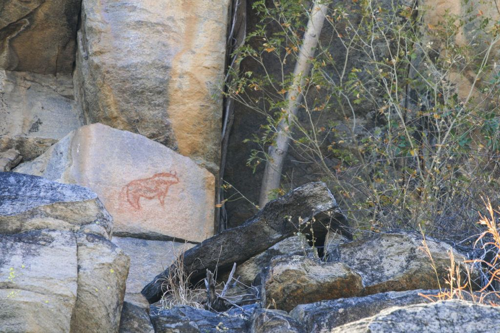 Rock painting of Cape Buffalo drawn in red pigment at Tsodilo Hills World Heritage Site.