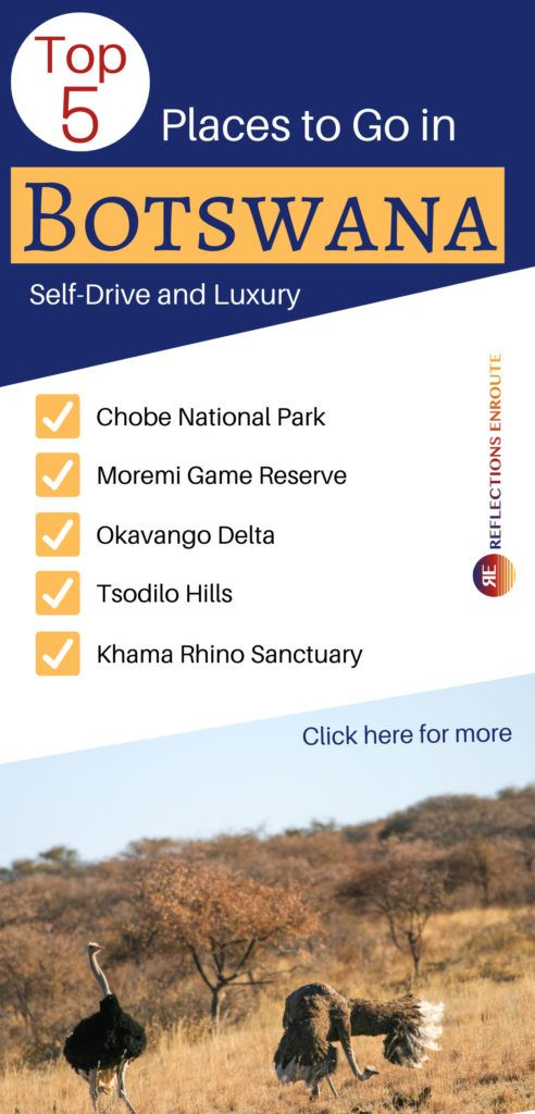 Top 5 Places to Go in Botswana - mating ostriches.