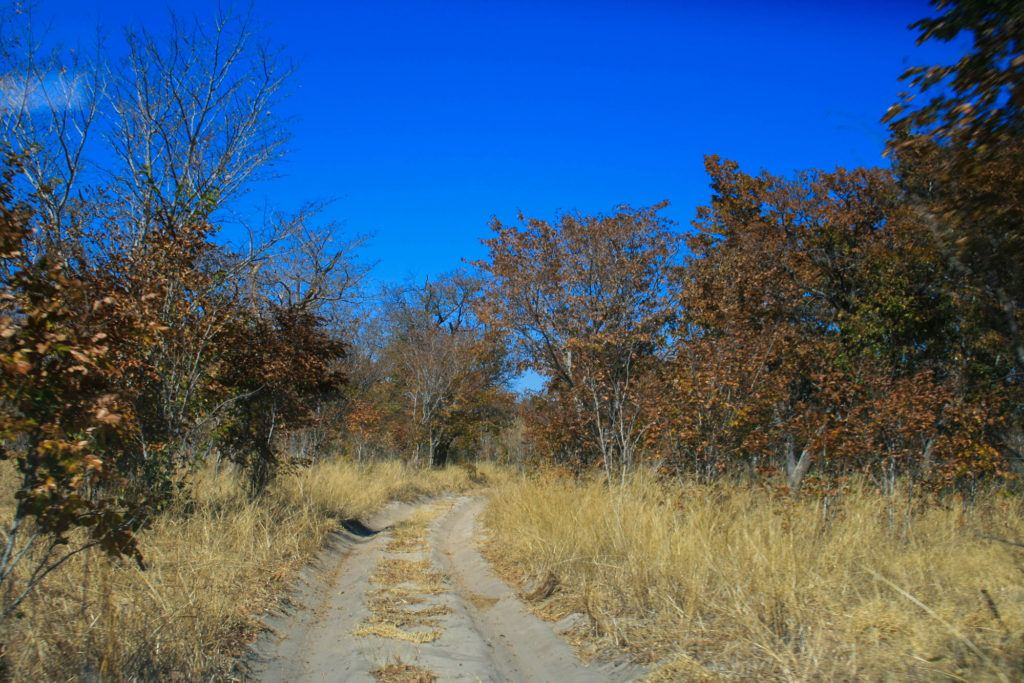 One of the rutted, narrow dirt roads we traveled during our self-drive safari in Botswana.