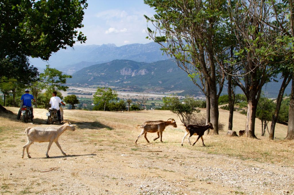 Motor scooters and goats are definitely things you would see on a Greek road trip.