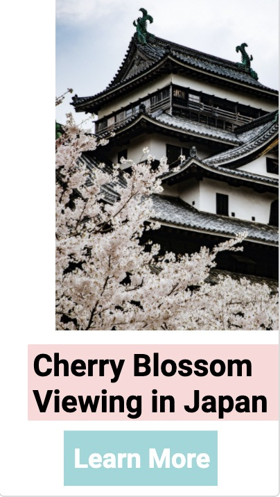 Web Story Cherry Blossoms Japan.