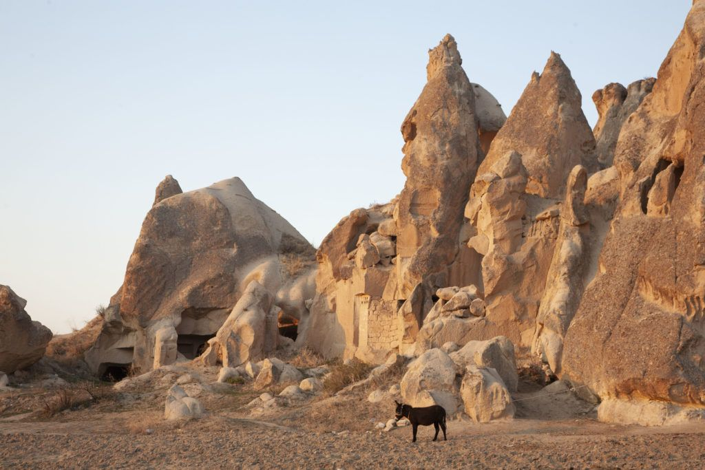 A lone donkey stands outside a home carved into a cluster of cone-shaped volcanic towers in the Cappadocia area.