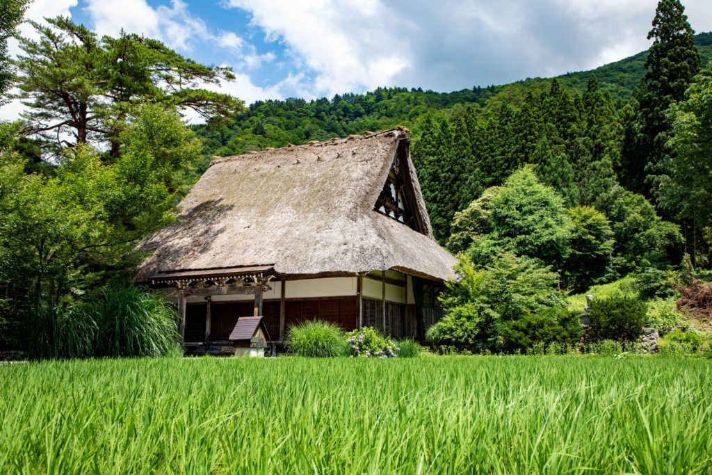 Summer in Shirakawa-go is green which highlights the tan thatch on the world heritage roofs.