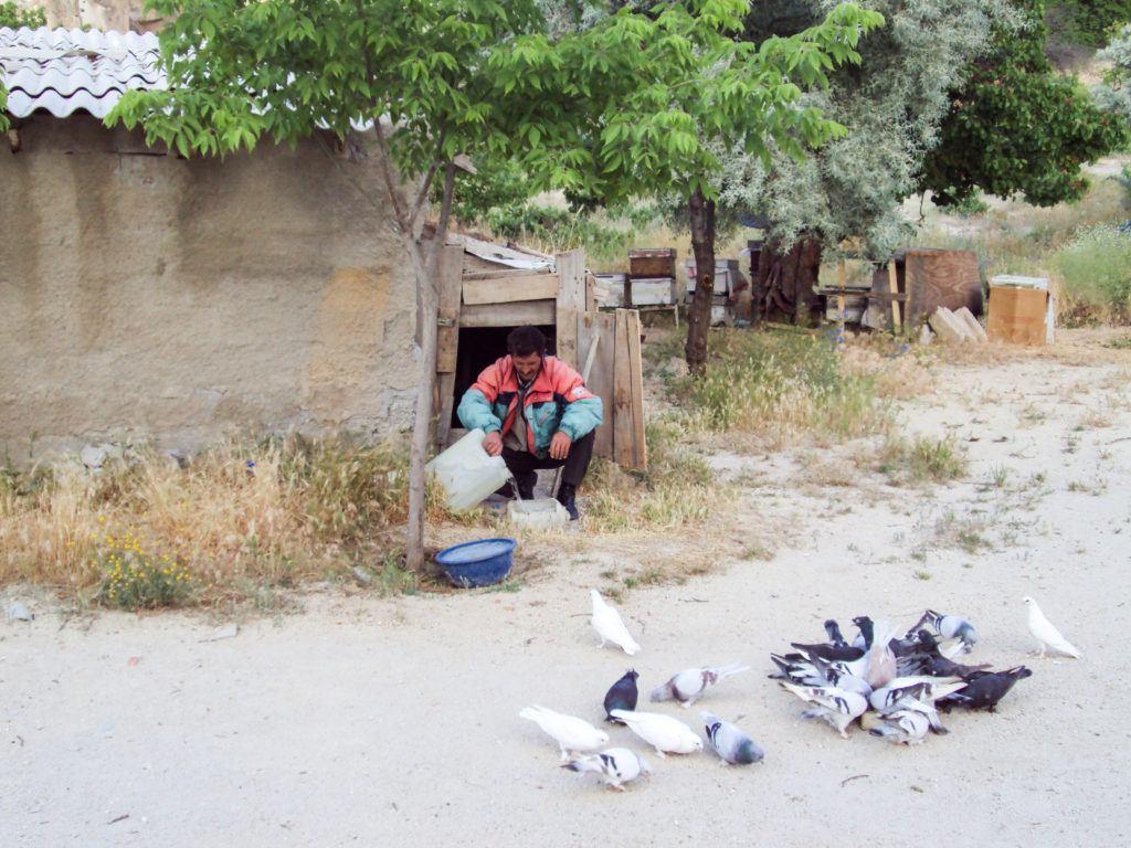 A pigeon keeper tends his flock in Pigeon Valley Kapadokya.