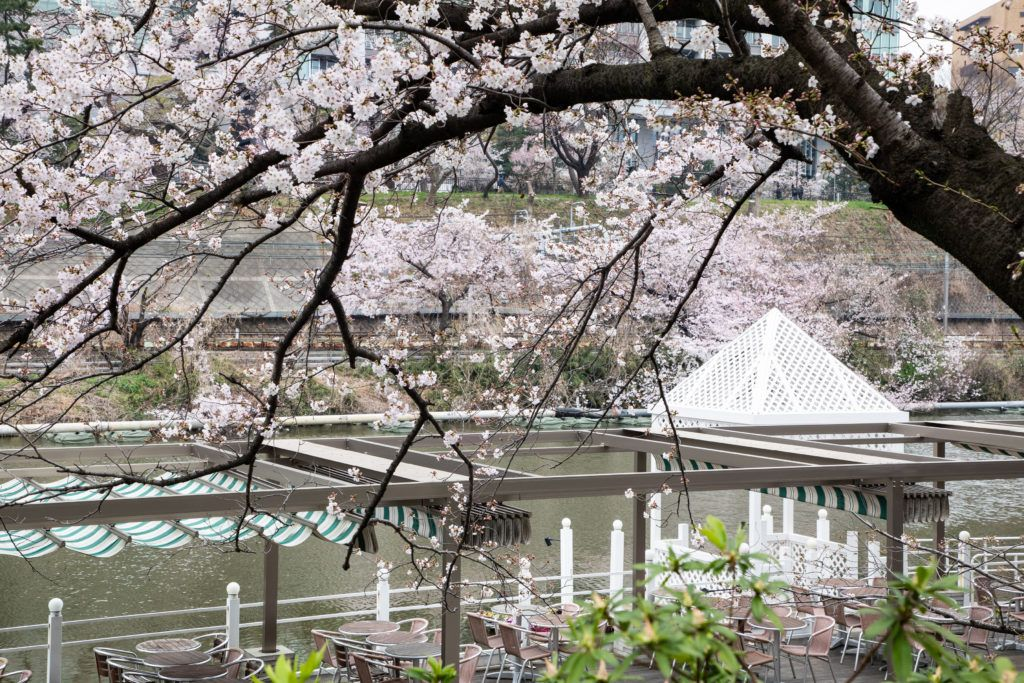 A Tokyo restaurant great for eating with a sakura view.