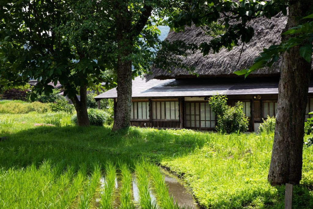 A green rice paddy is part of the traditional gassho-zukuri house.