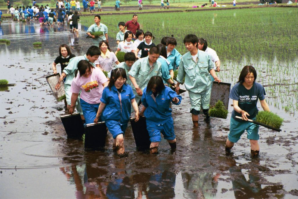 Spring rice planting by nearby high school students.