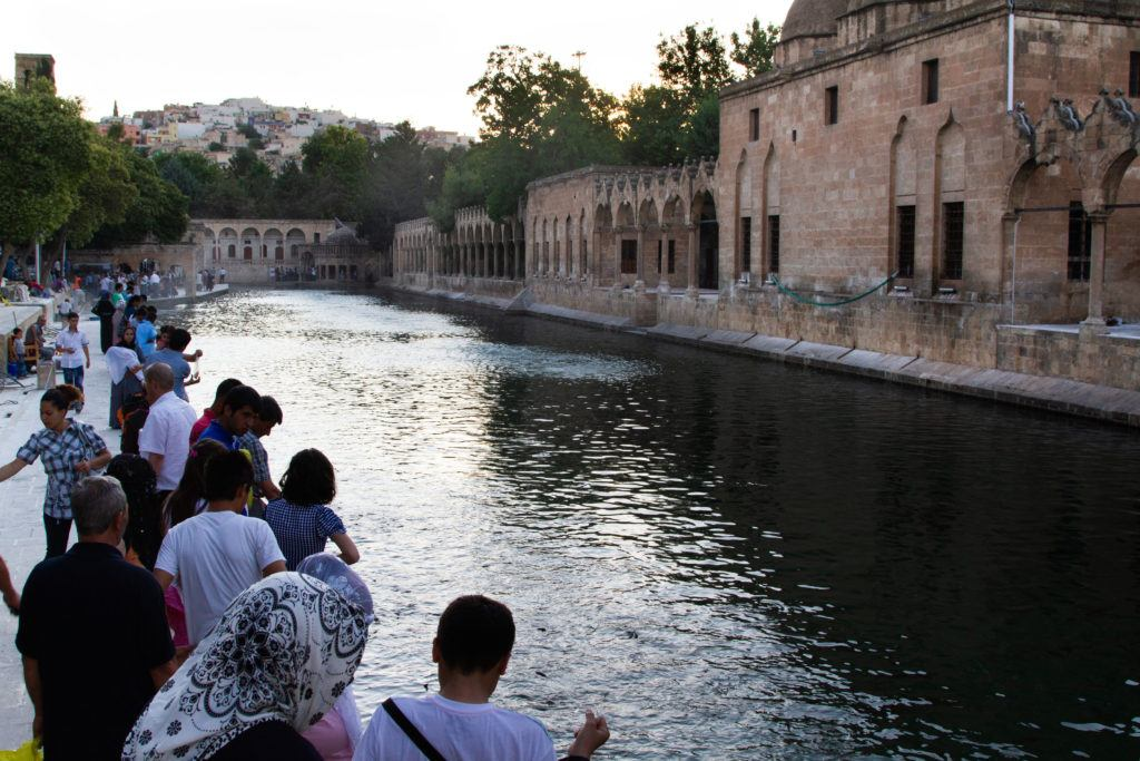 The history of Sanliurfa will tell you that this is reputed to be Abraham's pond.