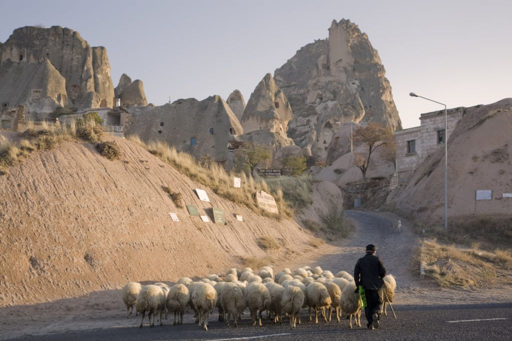 A man herds a flock of sheep into Uchisar in the Cappadocia region.