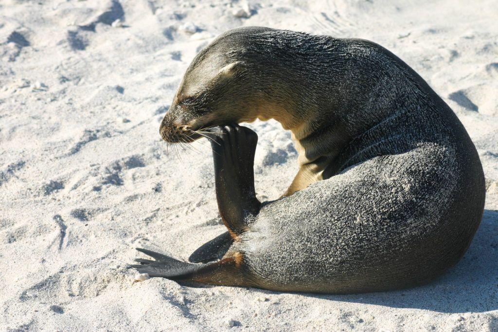 A baby sea lion.