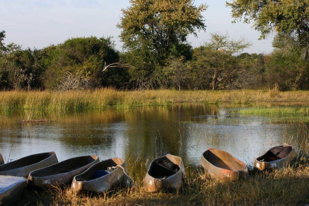 Mokoros lined up along the water's edge ready for an Okavango Delta Safari.